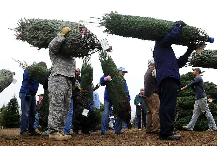 About 40 people went to Wahmhoff Farms, just south of Otsego, Mich., on Monday morning, Dec. 3, 2012 to help load trees for Wahmhoff farms Trees for Troops event, loading Michigan-grown Christmas trees onto trucks destined for Fort Knox, Ky. Photo: Matt Gade, Associated Press