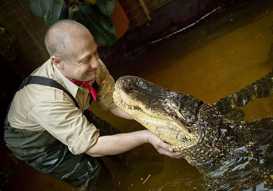 C'mon, give us a smile, big boy: Orazio Martino plays with his 23-year-old Mississippi alligator, Blacky, at his house in Dietzenbach, Germany. The former pizza chef is known throughout Germany for his private zoo and exotic shows. Photo: Frank Rumpenhorst, AFP/Getty Images