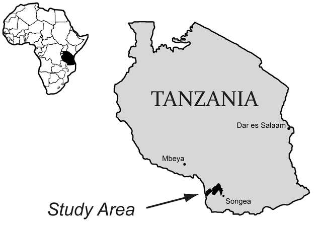 Bones of Nyasasaurus parringtoni were collected in southwest Tanzania in the 1930s from the Manda beds, which preserve fossils of many animals from the Triassic Period of Earth's history. Photo: University Of Washington