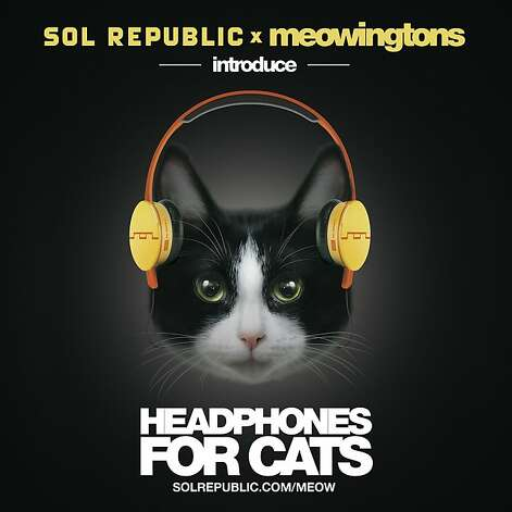 Sol Republic and Meowingtons introduce headphones for cats. Photo: Sol Republic