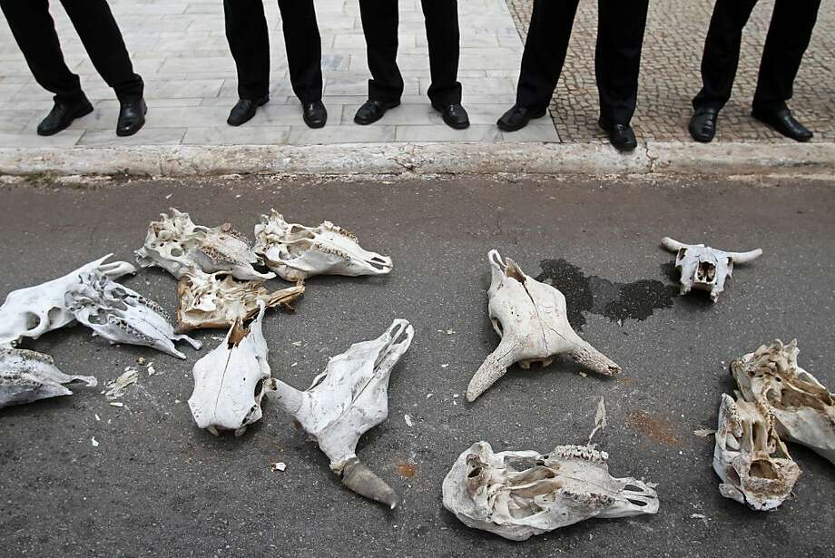 Oxen skulls representing animals killed by the drought lay at the feet of security agents outside Planalto presidential palace in Brasilia, Brazil, Tuesday, Dec. 4, 2012. Brazilian farmers affected by the drought brought oxen skulls to the presidential palace and are asking the president to pardon their government bank debts. Photo: Eraldo Peres, Associated Press