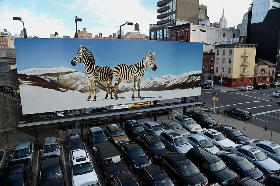 Way out of Africa:Above-the-snow-line zebras overlook sedans and SUVs in a 10th Avenue parking lot in New York. The billboard is by Italian artist Paola Pivi. Photo: Stan Honda, AFP/Getty Images