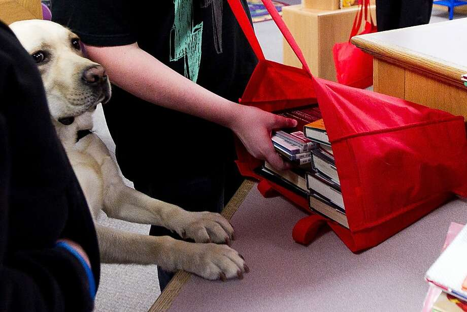Checking out some dog-eared volumes:On command, Topper puts his paws on the counter as an autistic boy named Sawyer Hamilton checks out books at the library in Spanish Fork, Utah. Service dogs like Topper have helped Josh's mental development, and now he reads above grade level. Photo: Wayne E Donnelly, Associated Press