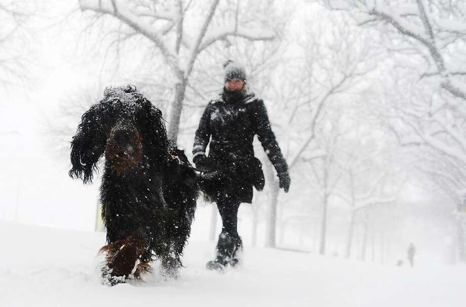 Frosty the Fido:A blizzard turns a walk in the park into a whiteout in Stockholm. Photo: Jonathan Nackstrand, AFP/Getty Images