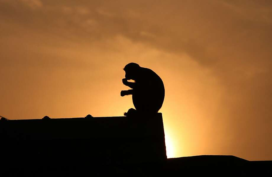 A monkey is silhouetted against the setting sun as it sits on stone slabs earmarked at Karsevak Puram workshop for the construction of a Hindu Temple in Ayodhya on December 5, 2012, on the eve of the 20th anniversary of the demolition of the Babri Masjid. India risked being torn apart by sectarian conflict 20 years ago when Hindu zealots demolished a mosque, triggering deadly riots, but analysts say economic growth has proved a quiet balm on tensions. Photo: Sanjay Kanojia, AFP/Getty Images
