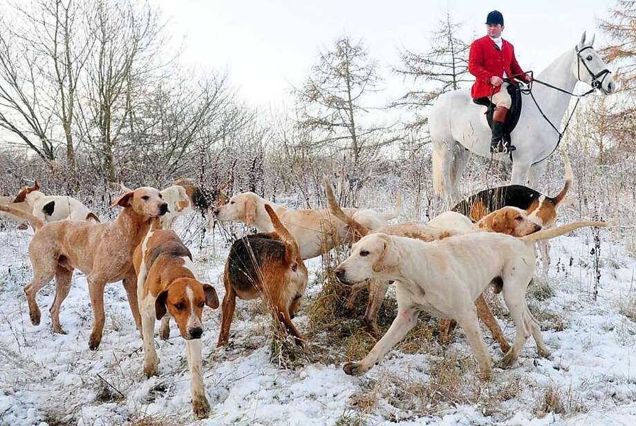 The hounds of the Saltersgate Farmers Hunt find themselves in the snow at Low Kingthorpe Wood, England, as snow fell across the country Wednesday, Dec. 5, 2012. Photo: Anthony Chappel-Ross, Associated Press