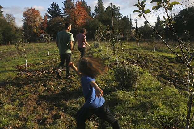 Benny Heath, 5 years old, running as his parents Scott Heath and Ellen Cavalli (background) walk through the apple orchard in Sebastopol, Calif., on Wednesday,  November 28, 2012.   Planted two years ago, they've planted traditional cider apple varieties. Photo: Liz Hafalia, The Chronicle