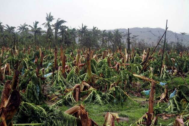 Banana trees destroyed by Typhoon Bopha are seen at a plantation in Compostela town, Compostela Valley province, in southern island of Mindanao on December 4, 2012. Typhoon Bopha killed 43 people in one hard-hit Philippine town December 4, local television station ABS-CBN reported from the scene.   AFP PHOTO/Karlos ManlupigKARLOS MANLUPIG/AFP/Getty Images Photo: KARLOS MANLUPIG, AFP/Getty Images / AFP