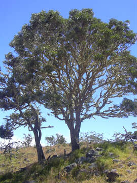 Hawaiian Legacy Hardwoods is planting hundreds of thousands of koa trees on the island of Hawaii; you can designate one as a gift for $60, which includes a $20 donation to a nonprofit of your choice.