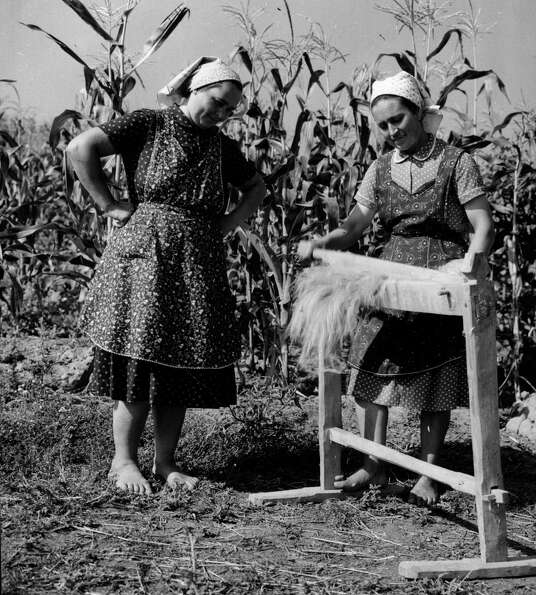 Women dress their hemp crop before weaving the plant into linen in August 1958.