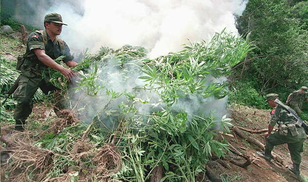 "Members of the ""Mars Work Force"" anti-narcotics special brigade burn marijuana on Aug. 14, 1995 in Sinaloa State in western Mexico. Photo: MATIAS RECART, AFP/Getty Images / AFP"