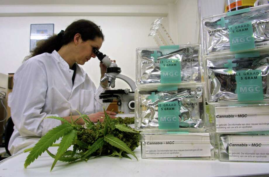 An assistant studies marijuana/cannabis leaves in the Maripharma Laboratory February 15, 2002 in Rotterdam, The Netherlands. The Dutch government is the first in the world to officially approve the cultivation and sale of cannabis products to pharmacies for medical purposes. Photo: Michel Porro, Getty Images / Getty Images North America