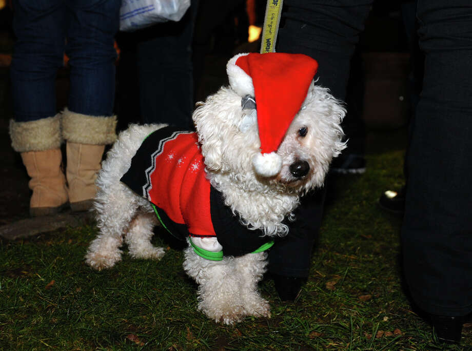 Artist MIA Lipstick's dog Orion is decked out for the holidays during the annual Downtown Holiday Tree Lighting at McLevy Green in downtown Bridgeport, Conn. on Thursday December 6, 2012. Photo: Christian Abraham / Connecticut Post