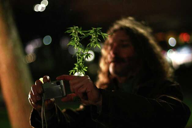 "A participant tries to take a photo while holding a branch from a pot plant on Thursday, December 6, 2012 during a ""stash mob"" at Seattle's International Fountain. Recreational use of marijuana was legalized by voters in Washington State and people have been celebrating by smoking publicly. Photo: JOSHUA TRUJILLO / SEATTLEPI.COM"