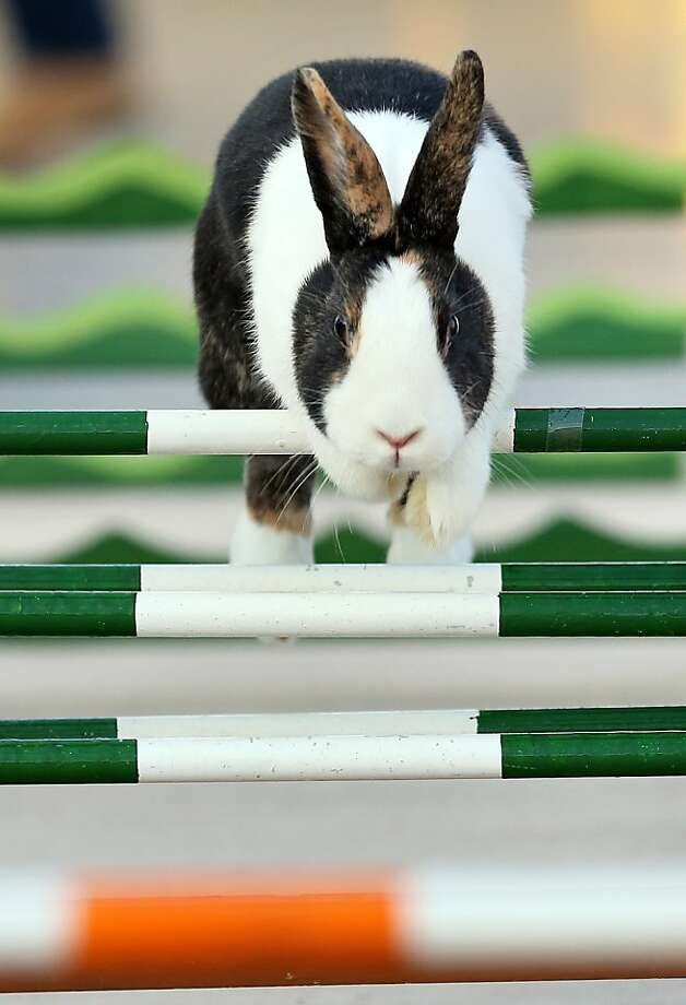 Leipzig leaper: A track specialist clears an obstacle in the high hurdles at the 27th EE Europe Show in Leipzig. Photo: Jan Woitas, AFP/Getty Images