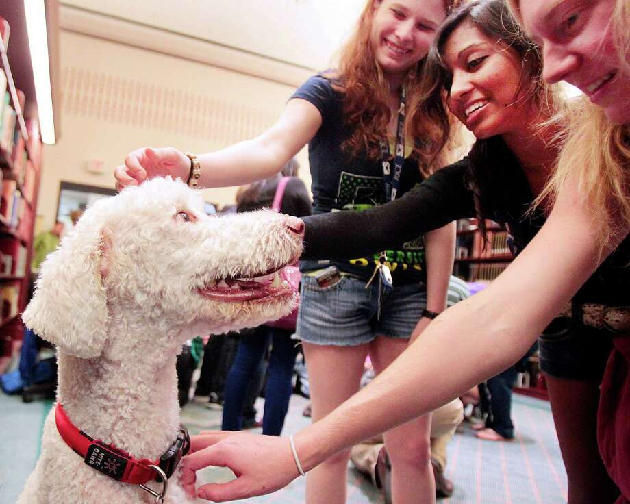 Rice student (l-r) Nicole Moody, Tasneem Islam, and Hannah Bron rush to pet  Rudy during a visit from Faithful Paws a pet therapy group.