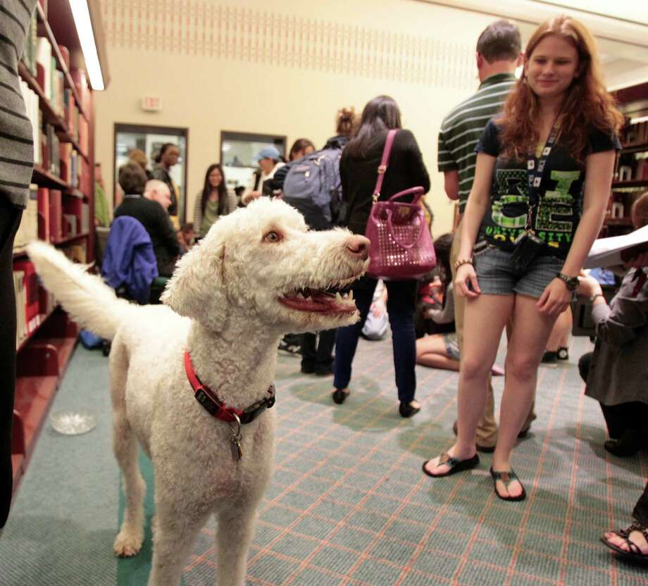 Rudy takes a look around during a visit from Faithful Paws a pet therapy group.  Rice University students looked to pet therapy to relieve the stress of  studying for finals, Thursday December 6, 2012 at Rice University's Fondren Library. Photo: Billy Smith II, Chronicle / Houston Chronicle