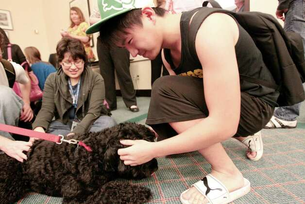 (right) Rice student Jim Sheng pets Sadie a portuguese water dog during a visit from Faithful Paws a pet therapy group.