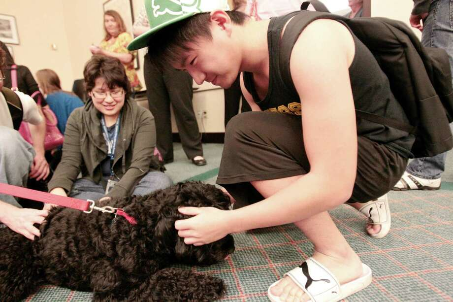(right) Rice student Jim Sheng pets Sadie a portuguese water dog during a visit from Faithful Paws a pet therapy group.  Rice University students looked to pet therapy to relieve the stress of  studying for finals, Thursday December 6, 2012 at Rice University's Fondren Library. Photo: Billy Smith II, Chronicle / Houston Chronicle