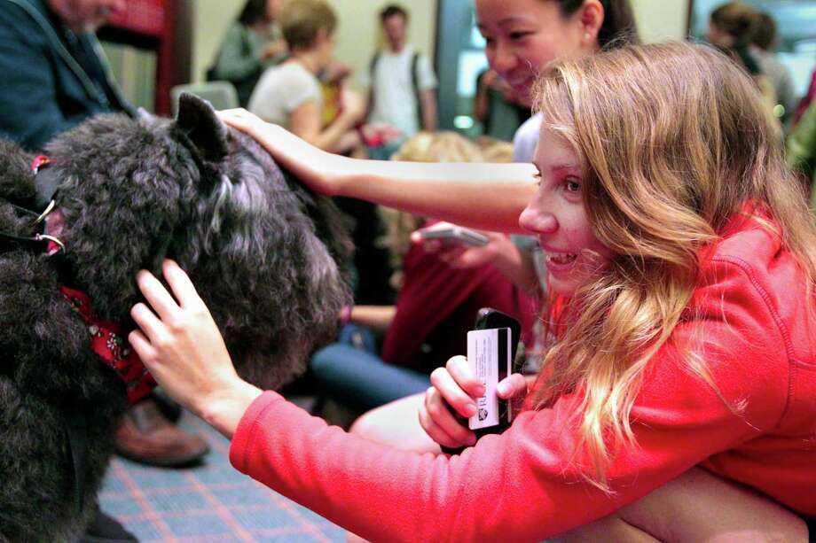 Rice student Sofi Minick pets K.C. during a visit from Faithful Paws a pet therapy group.  Rice University students looked to pet therapy too relieve the stress of  studying for finals, Thursday December 6, 2012 at Rice University's Fondren Library. Photo: Billy Smith II, Chronicle / Houston Chronicle