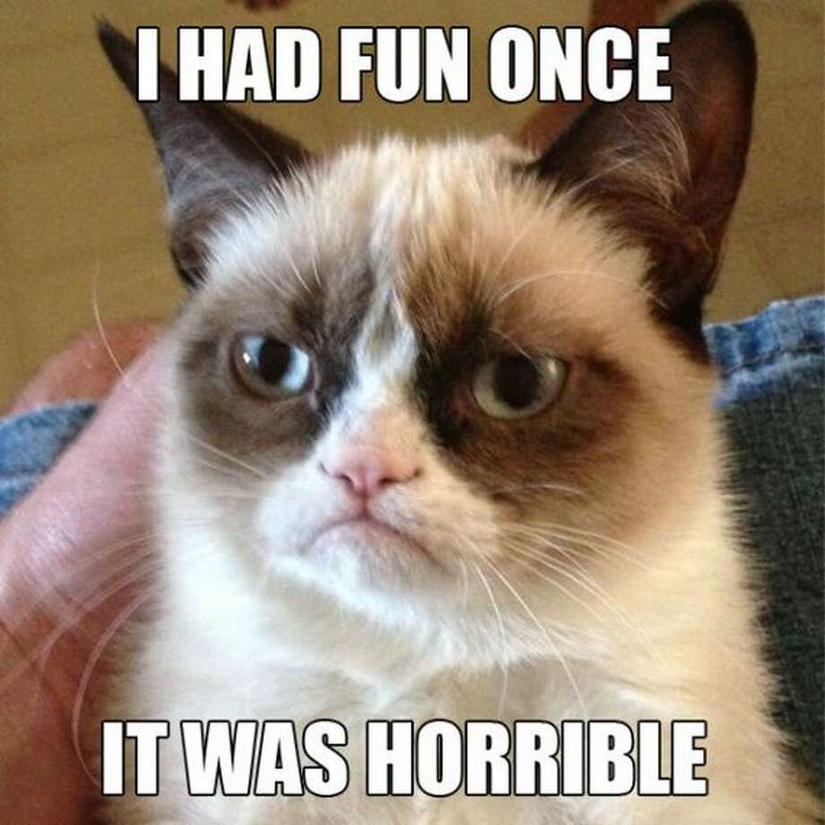 "Grumpy Cat, whose real name is ""Tarder Sauce,"" has become the new Ron Swanson. Photo: ."
