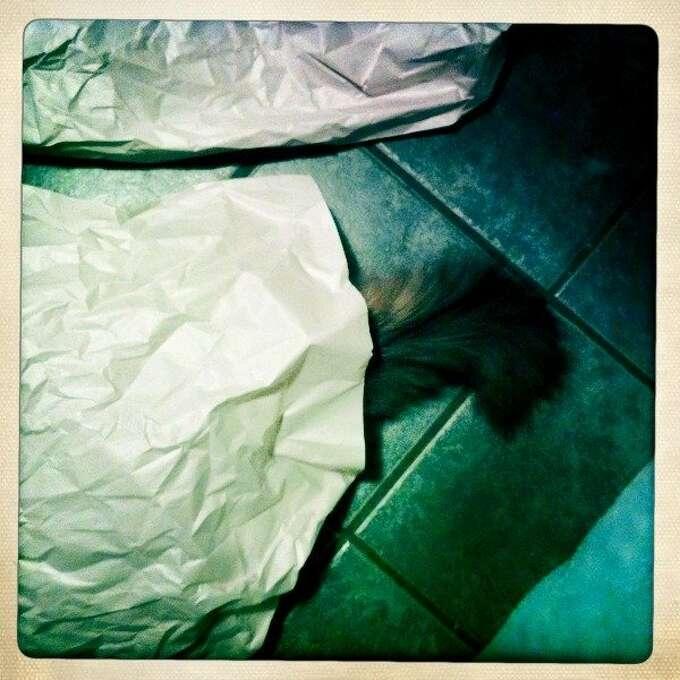 Juma hides under some paper on the kitchen floor. Photo: Jamie Cotten