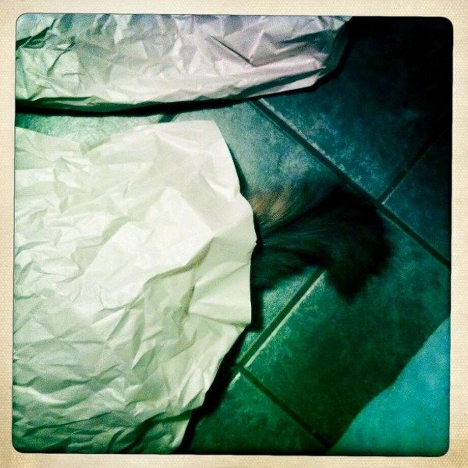 Juma hides under some paper on the kitchen floor. Photo: Jamie Cotten