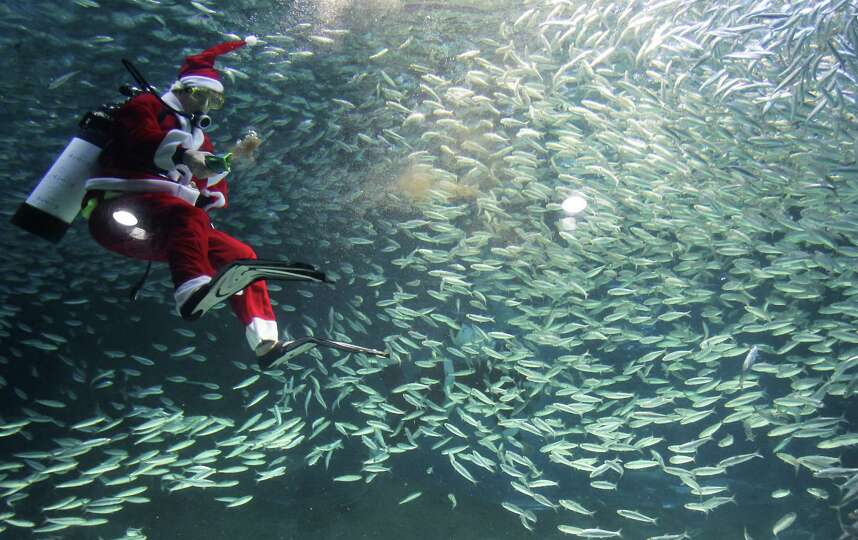 A South Korean diver clad in Santa Claus costume swims with sardines at The Coex Aquarium on Decembe