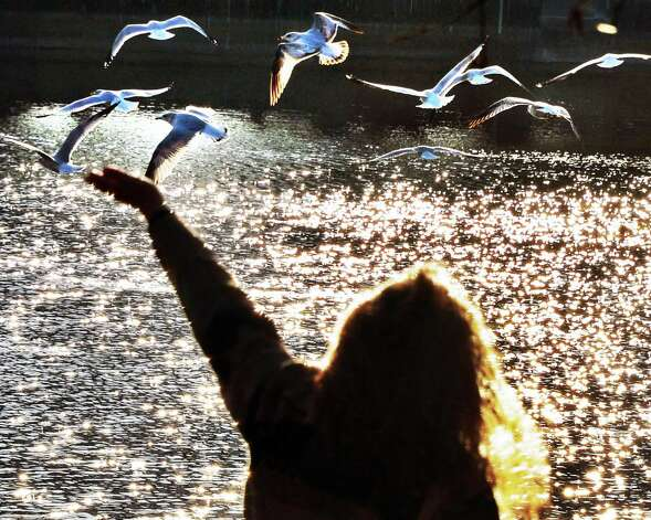 Victoria Vachon of  Niskayuna feed seagulls at Central Park in Schenectady Tuesday Dec. 4, 2012.  (John Carl D'Annibale / Times Union) Photo: John Carl D'Annibale / 00020351A