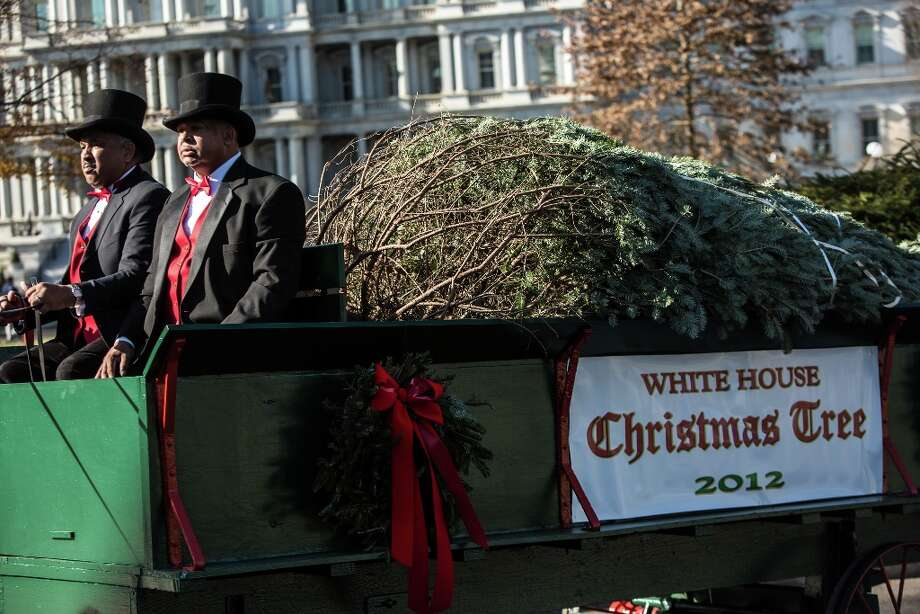 The official White House Christmas Tree is delivered to the White House on November 23, 2012 in Washington, DC. The tree is a 19-foot Fraser Fir from Peak Farms in North Carolina, which is owned by Rusty and Beau Estes. Photo: Brendan Hoffman, Getty Images / 2012 Getty Images
