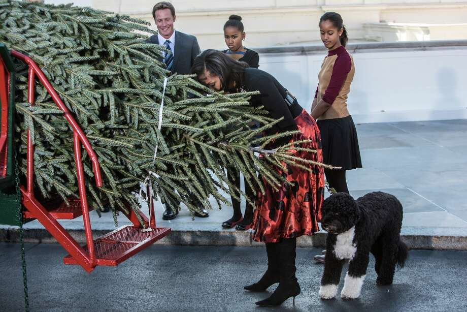 First lady Michelle Obama leans down to smell the official White House Christmas Tree after it was delivered to the White House, as her daughters Malia Obama (R) and Sasha Obama look on, on November 23, 2012 in Washington, DC. The tree is a 19-foot Fraser Fir from Peak Farms in North Carolina, which is owned by Rusty and Beau Estes. Photo: Brendan Hoffman, Getty Images / 2012 Getty Images