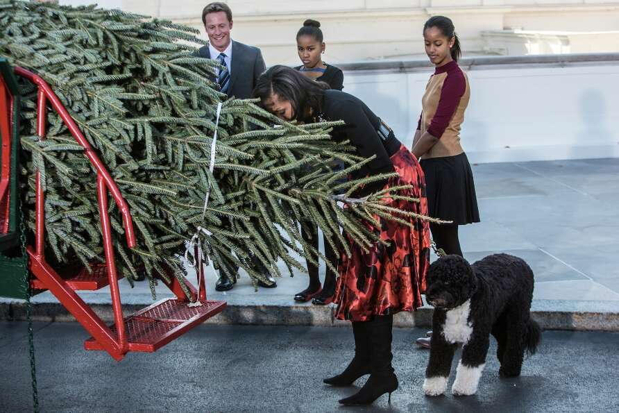 First lady Michelle Obama leans down to smell the official White House Christmas Tree after it was d