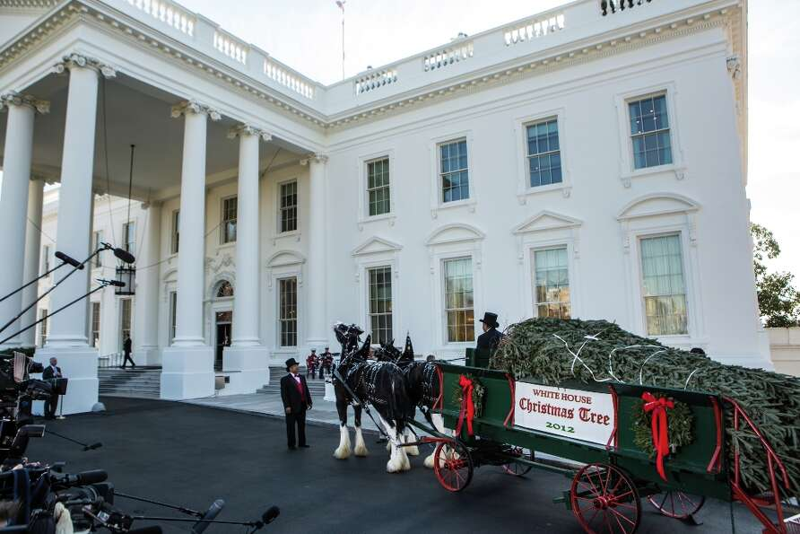 The official White House Christmas Tree is delivered to the White House on November 23, 2012 in Wash