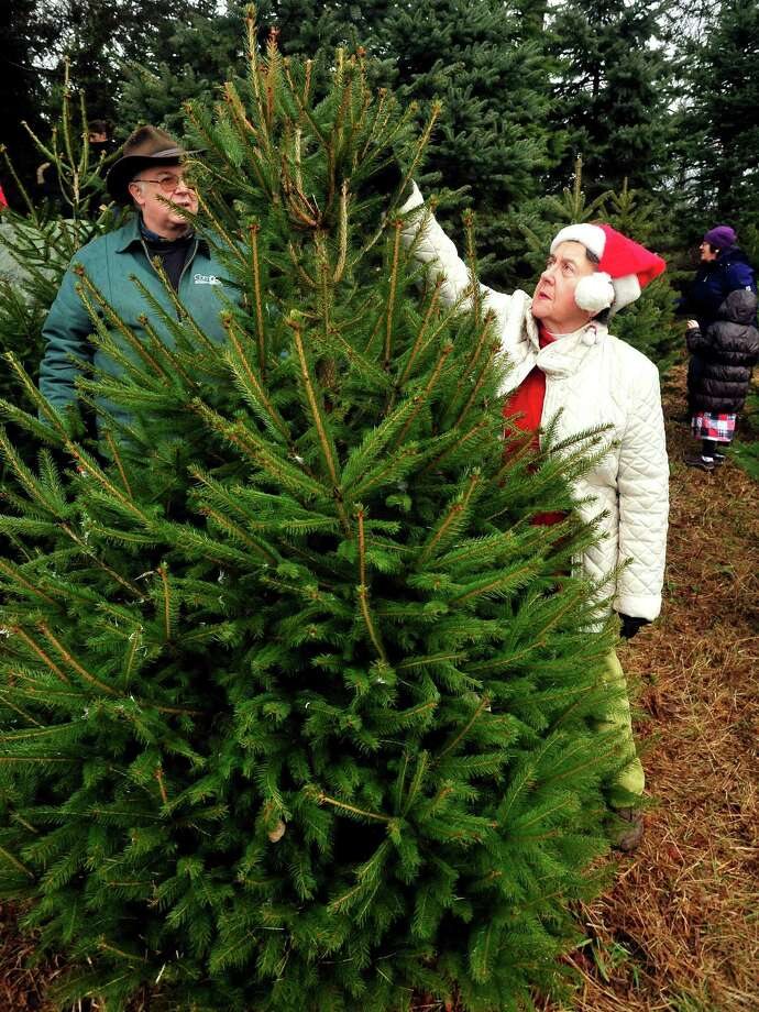 Roger Wechter and Barbara O'Connor select one of two Christmas trees for their families at Paproski's Tree Farm in Newtown Sunday, Dec. 9, 2012. Photo: Michael Duffy