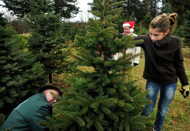 Roger Wechter cuts a Christmas tree held by Kalee Oelgoetz as Barbara O'Connor watches at Paproski's Tree Farm in Newtown Sunday, Dec. 9, 2012. Photo: Michael Duffy