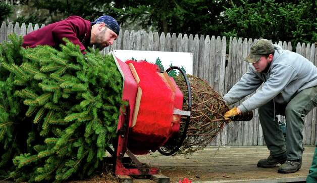 Roman Horbaty, left, and Carl Cole bail the Marple's freshly cut Christmas tree at Paproski's Tree Farm in Newtown Sunday, Dec. 9, 2012. Photo: Michael Duffy