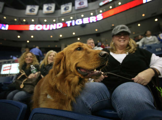 Wendy Azukas of New Haven and her dog Walter watch the Bridgeport Sound Tiger take on Syracuse during Pucks & Paws night at the Webster Bank Arena in Bridgeport on Sunday, December 9, 2012. Proceeds from the event benefit the Bridgeport Animal Hospital. Photo: Brian A. Pounds / Connecticut Post