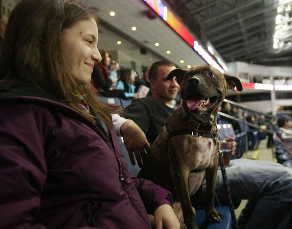 Amber Martucci and John McHugh, of West Haven, and their dog, Taz, attend Pucks & Paws night at the Webster Bank Arena in Bridgeport on Sunday, December 9, 2012. Proceeds from the event benefit the Bridgeport Animal Hospital. Photo: Brian A. Pounds / Connecticut Post