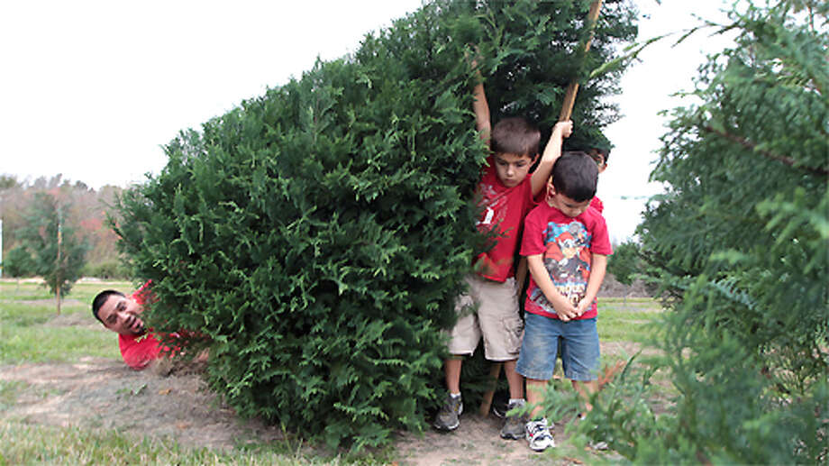 Six-year-old Seth Villegas 2nd from left catches a christmas tree as his four-year-old brother Tomas Villegas right, and his father Fidel Villegas looks down at the Old Time Christmas Tree Farm Sunday, Dec. 9, 2012, in Spring. Photo: James Nielsen, . / © Houston Chronicle 2012