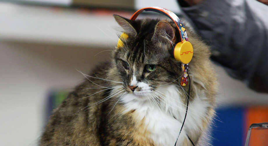 deadmau5 'Professor Meowingtons' cat headphones. Perfect for that obnoxious feline who is constantly blasting techno around the house. For the low price of $999. (SOL Republic)