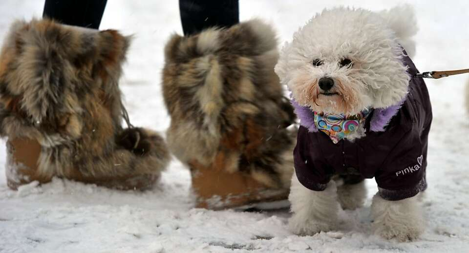 Best of shoe: A bundled bowwow makes friends with a couple of furry