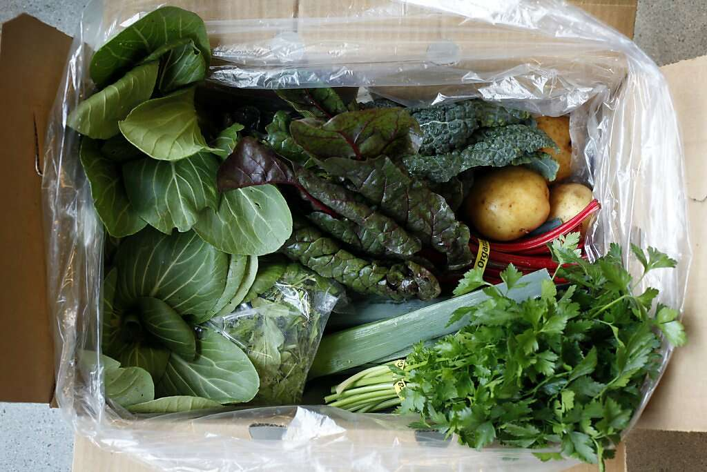 the contents of a small veggie box from bloomfield farms in petaluma delivered by farmigo box san francisco office 5