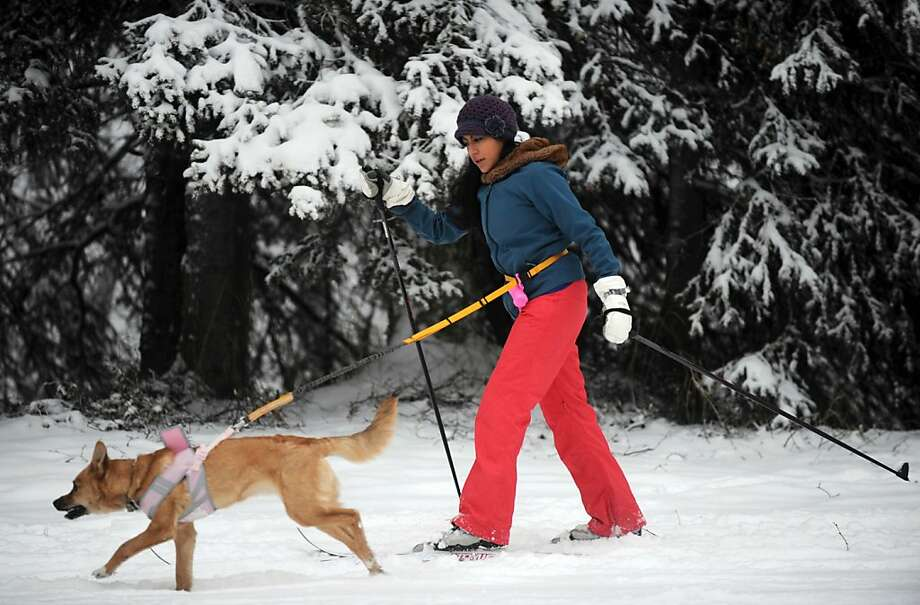 Ana Avila takes her 6-month-old dog Lola cross country skiing for the first time in the fresh snow, December 9, 2012, at Russian Jack Springs Park in Anchorage, Alaska. (Bill Roth/Anchorage Daily News/MCT) Photo: Bill Roth, McClatchy-Tribune News Service