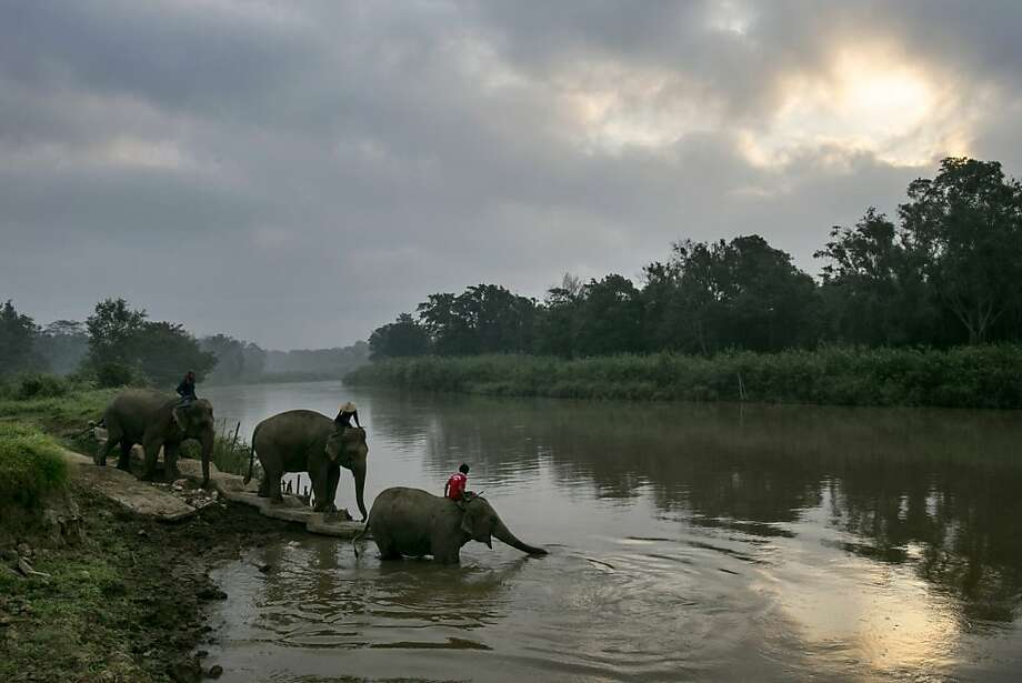 Elephants wade into the river for an early morning bath at Thailand's Anantara Golden Triangle resort. Photo: Paula Bronstein, Getty Images