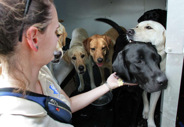 Sarah Mumme, left, an instructor with Guide Dogs of Texas, puts a dog back in the air conditioned van where others wait to be trained in the downtown area of San Antonio, Wednesday, Aug. 8, 2007. Photo: Bob Owen, San Antonio Express-News / SAN ANTONIO EXPRESS-NEWS