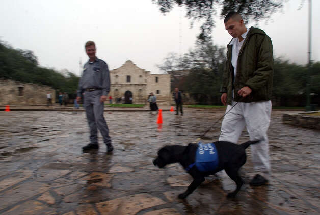 Dominguez State Jail inmate Randy Levine (right) walks Yukon, a five-and-a-half-month old labrador, in Alamo Plaza as jail officer Steven Clayton stands by on Thursday, January 15, 2004. In cooperation with Guide Dogs of Texas, jail inmates have trained canines for the blind since 2000. The program forges one-and-half year relationship between the dog and inmate. Recently, inmates were given permission to train with the canines around the city under guard supervision. Jail officials and Guide Dogs of Texas officials claim the program as a success for both inmates and dogs. Photo: KIN MAN HUI, San Antonio Express-News / SAN ANTONIO EXPRESS-NEWS