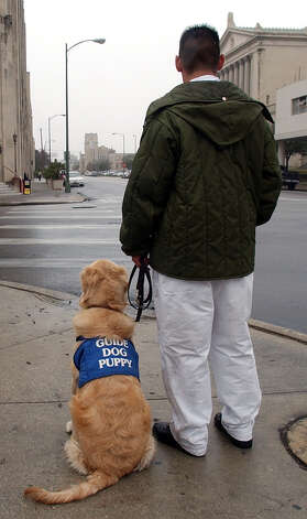 Inmate Robert Sierra and Chip, a 13-month-old golden retriever, wait to cross an intersection in downtown on Thursday, January 15, 2004. Inmates from the Dominguez State Jail in cooperation with Guide Dogs of Texas have trained canines for the blind since 2000. The program forges one-and-half year relationship between the dog and inmate. Jail officials and Guide Dogs of Texas officials claim the program as a success for both inmates and dogs. Photo: KIN MAN HUI, San Antonio Express-News / SAN ANTONIO EXPRESS-NEWS