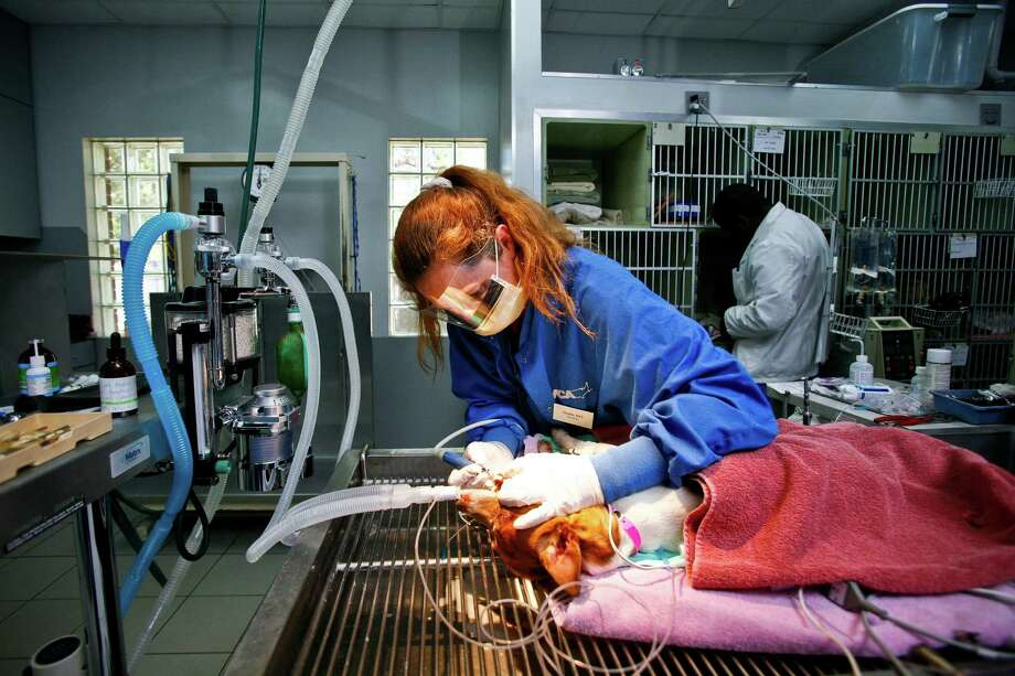 No. 3. Veterinary technologists and technicians