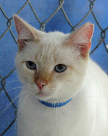 Winter would love to find a family to snuggle with on chilly nights.
