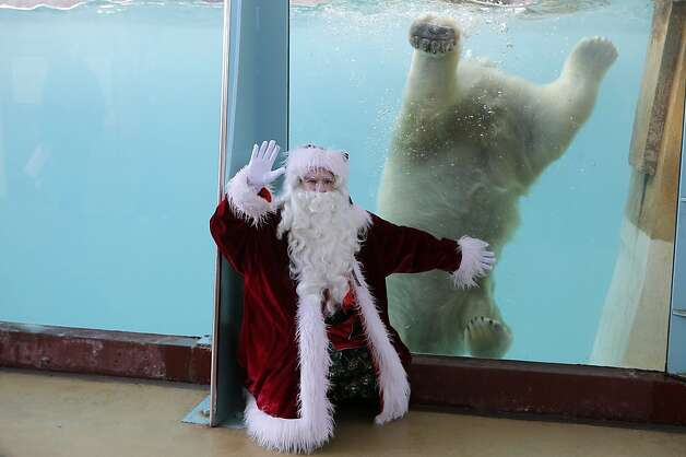 Christmas greetings from Aquatic Bigfoot! (Marineland, Antibes.) Photo: Lionel Cironneau, Associated Press